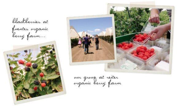 a berry tour