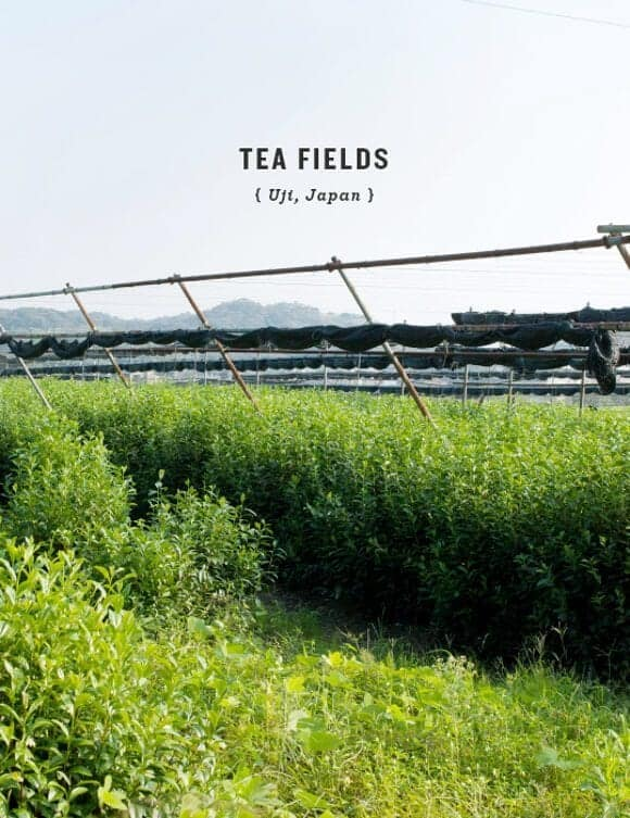 Tea fields, Uji Japan // loveandlemons.com